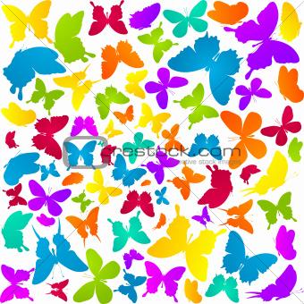 Butterflies in colors