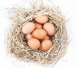Brown eggs in a nest on a white background