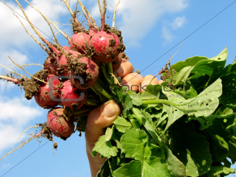 hand with radishes