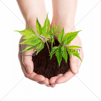 Plant in a hands