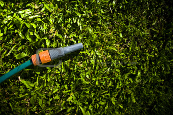 Lawn Maintenance And Garden Care
