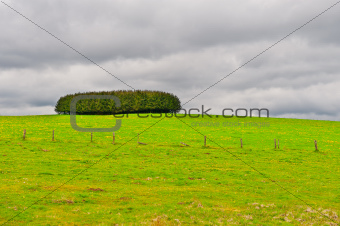 Pasture in the Ardennes