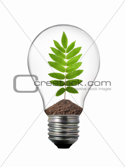 eco concept - lightbulb with rowan leaf inside