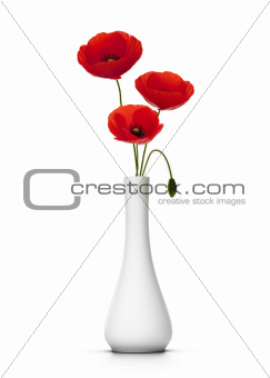 delicate poppies over white