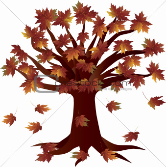 Fall Season Autumn Tree Illustration