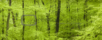 Fresh green forest in spring
