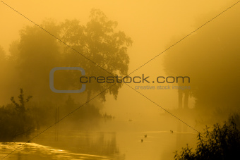Beautiful golden sunset with fog and birds