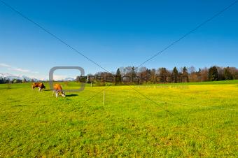 Pasture in Switzerland