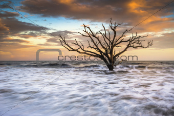 Botany Bay Edisto Island SC Boneyard Beach Sunset Landscape Charleston