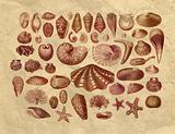 Exotic sea shells collection