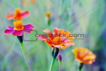 Tibetan happiness flower
