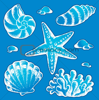 Sea shells drawings 2