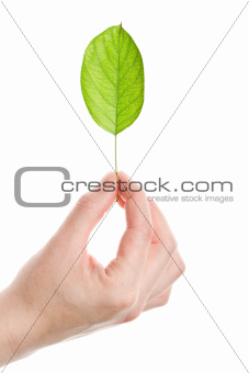 Green leaf in hand