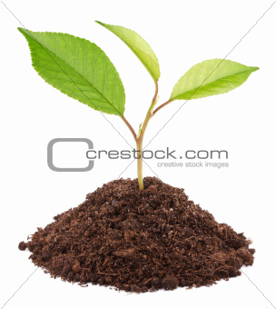 Young green plant in soil