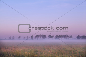 Dutch pasture at sunrise