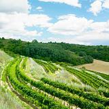 vineyards, Eko Hnizdo, Czech Republic