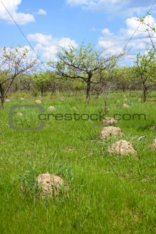 Anthill among green grass