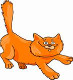 running red fluffy cat