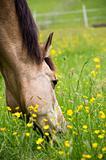 Toxic to horses