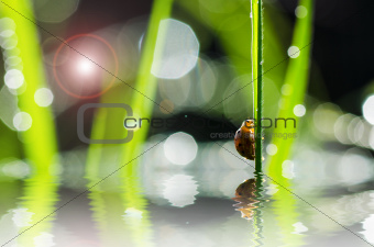 ladybug and sunlight bokeh in green nature
