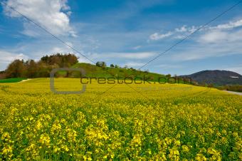 Pastures of Lucerne
