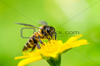 bee macro in green nature