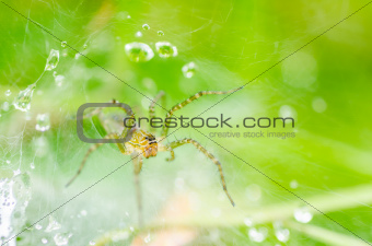 spider and web water drops in nature 