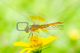 dragonfly in green nature