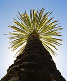 palm against the blue sky