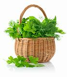 fresh spicy herbs in basket