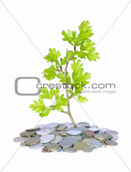 green plant and money 