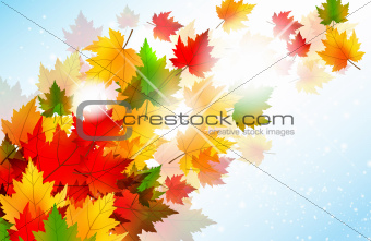 Vibrant Autumn Maple Leaf Background