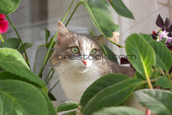 Cat near leaves of flower.