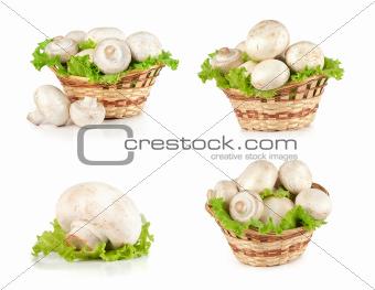 Champignon mushroom set