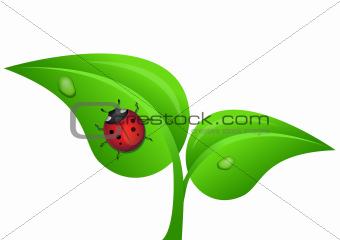 ladybug on a plant