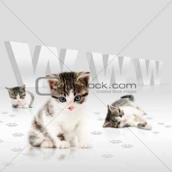 Young cats-internet concept