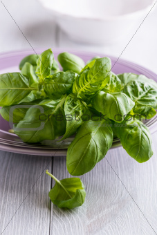 Fresh basil on a  plate