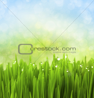 Green Grass with Water Drops on Abstract Bokeh Background