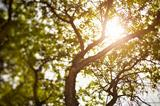 summer tree, natural light, selective focus, made with tilt-shift lens