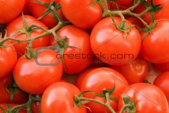full frame tomato background