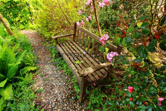 Beautiful romantic garden with wooden bench and azalea trees