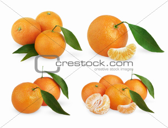 Set of ripe tangerines with leaves and slices