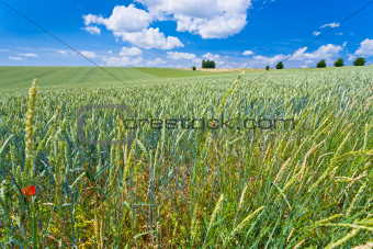 summer country field