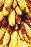 Pile of corn cobs
