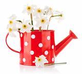 white spring flowers in red vase