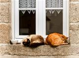Two cats are sleeping at window outdoor
