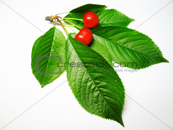 a cherry sprig