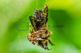 bee macro in green nature