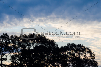 sillouette tree and sky