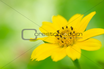 little yellow star in green nature